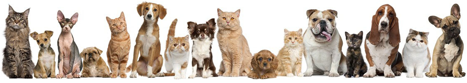 Totally Pawsome Pet Sitting Loving Care When You Re Not